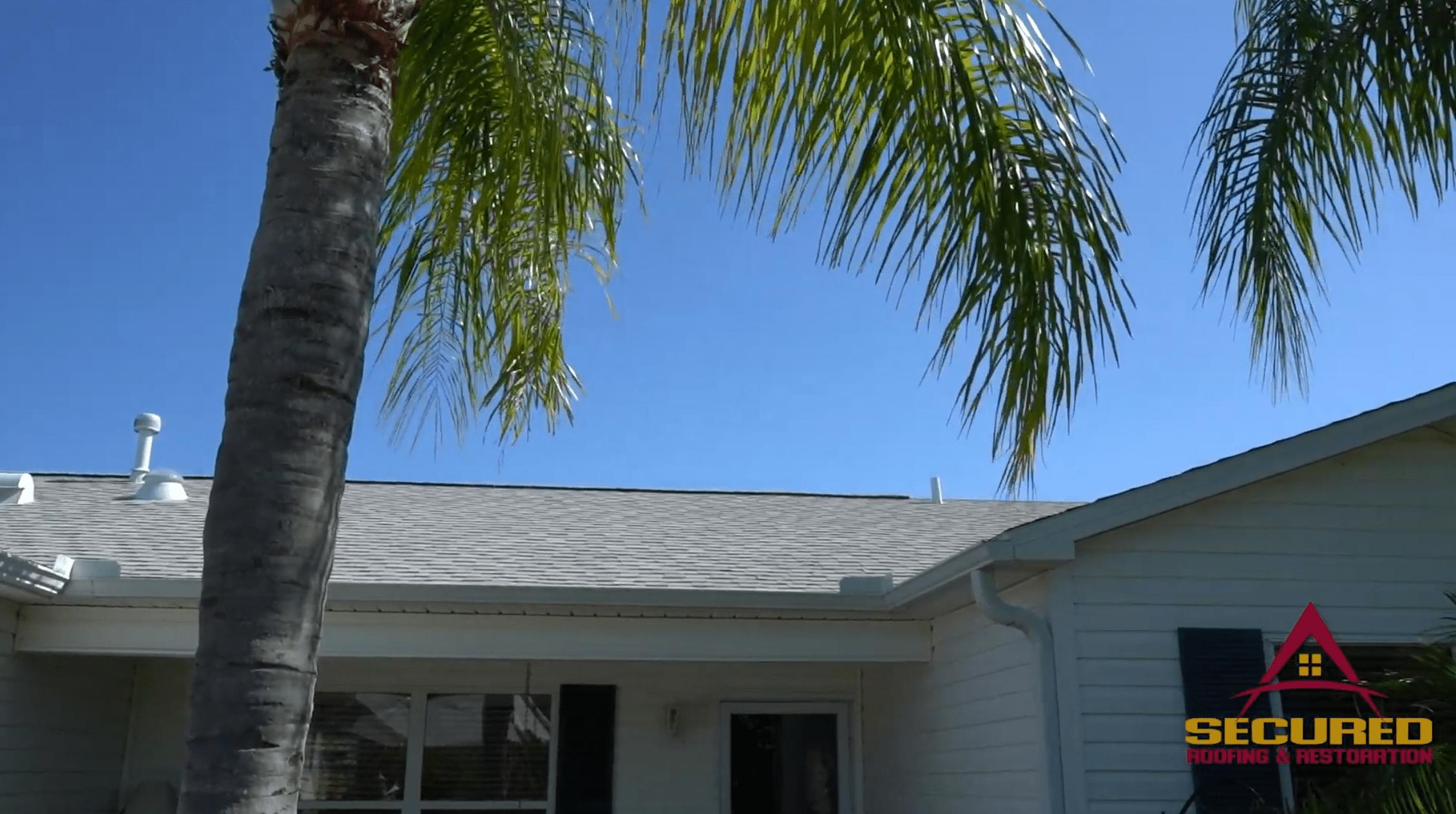palm tree and house
