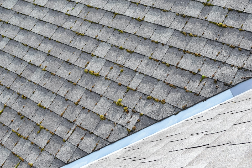 Different two parts of grey bitumen asphalt shingles roof one part overgrown with green moss other clean; how old is my roof