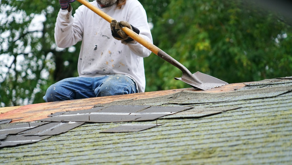 worker removing old shingle on the roof of the house for roof repair; DIY roof replacement